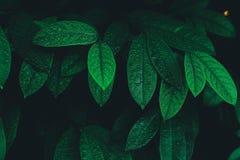 Grüne Sommer-Blätter Stockfoto