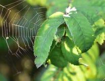 Grüne Spinne Stockbild