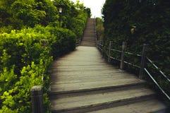 Grüne Spur Stockfotografie