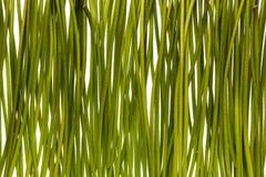 Grüne Stämme Stockfoto