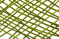 Grüne Stämme im Gitter Lizenzfreie Stockfotos