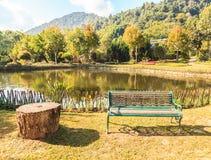 Grüne Stühle im Garten Stockfoto