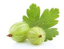 Grüne Stachelbeerefrucht mit Blatt auf Weiß stockbilder