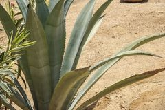 Grüne stachelige Kaktusnahaufnahme Lizenzfreies Stockfoto