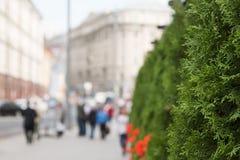 Grüne Stadt an einem sonnigen Tag stockbilder