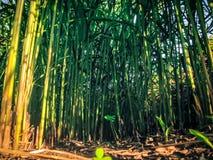 Grüne Stadt jungle7, Effektgras stockbild