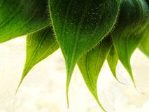 Grüne Steckverbindung Stockfotos