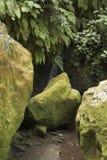 Grüne Steine im Garten Stockfotografie