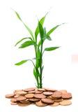 Grüne Stiele, die von einer Handvoll Goldmünzen wachsen Lizenzfreies Stockfoto