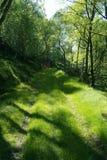 Grüne Straße durch den Wald Stockfoto