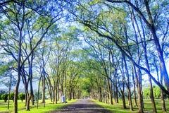 Grüne Straße mit forg morgens, Taiwan Lizenzfreie Stockbilder