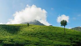 Grüne Täler von Teeplantagen in Munnar Lizenzfreie Stockfotos