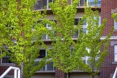 Grüne T-Stücke vor dem Backsteinbau im Stadtzentrum gelegen Lizenzfreie Stockbilder