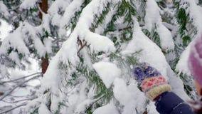 Grüne Tannen im Schnee im Winter stock video footage