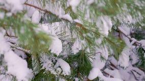 Grüne Tannen im Schnee im Winter stock footage