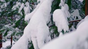 Grüne Tannen im Schnee im Winter stock video