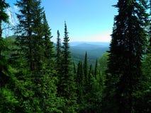 Grüne Tannenbäume, heißer Sommer, Steigungen von Bergen, grüne Vegetation, wilde Natur, Sommerlandschaft, Lizenzfreie Stockfotografie