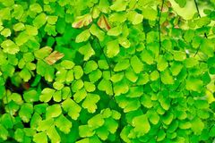 Grüne Tapete Stockfotografie