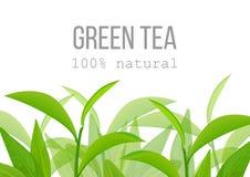 Grüne Teeblätter und Zweigaufkleberkarte 100 Prozent natürlich Stockfoto