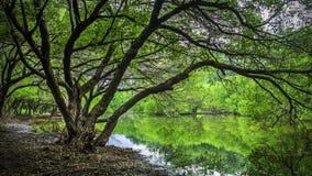 Grüne Teiche des Himmels Stockfotografie