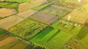 Grüne Terrassen von der Luft stock footage