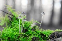Grüne Toadstools stockfotografie