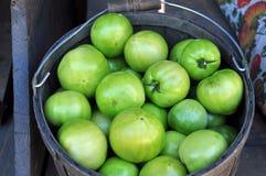 Grüne Tomate-Bratpfannen Stockfotografie
