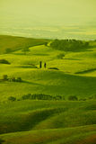 Grüne Toskana-Hügel Stockfotos