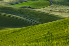 Grüne Toskana-Hügel Lizenzfreie Stockfotografie