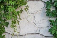Grüne Traube verlässt auf einem Hintergrund des weißen Steins Lizenzfreie Stockfotos