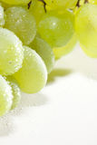 Grüne Trauben lizenzfreies stockbild