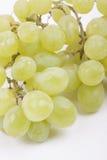 Grüne Trauben auf einem weißen Hintergrund Stockbild