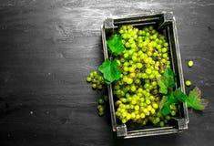 Grüne Trauben in einem Kasten Stockbilder