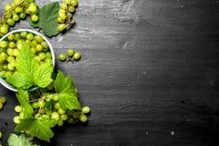 Grüne Trauben in einer Schüssel mit Blättern Lizenzfreie Stockfotos