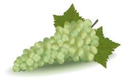 Grüne Trauben mit Blättern. Lizenzfreies Stockbild