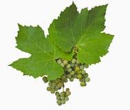 Grüne Trauben und Kennsatz Stockfoto