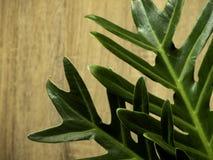 Grüne Tropen lassen Rahmen mit Kopienraum auf Holz stockfoto