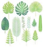 Grüne tropische Blätter stellten Vektorillustrationen ein stock abbildung