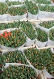 Grüne Tulpe sprießt im Markt Lizenzfreie Stockfotografie