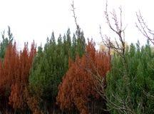 Grüne und braune Hecke im Herbst stockbilder