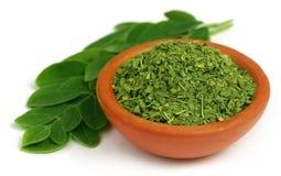 Grüne und dired Moringa-Blätter Stockfotos