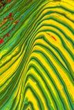 Grüne und gelbe abstrakte Malerei Stockbild