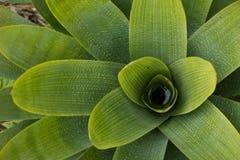 Grüne und gelbe Anlage Stockfotografie
