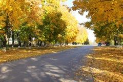 Grüne und gelbe Bäume Stockbilder