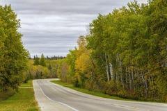 Grüne und gelbe Bäume stockfoto