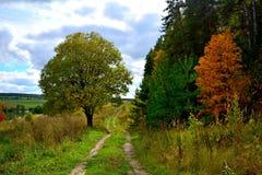 Grüne und gelbe Bäume Stockfotos