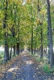 Grüne und gelbe Bäume Lizenzfreies Stockfoto