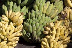 Grüne und gelbe Banane Lizenzfreie Stockbilder