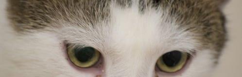 Grüne und gelbe Katzenaugen lizenzfreie stockbilder