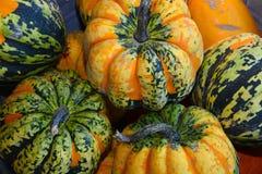 Grüne und orange Herbstkürbise Stockbilder